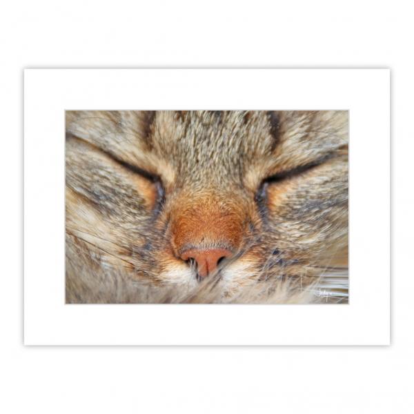 Pose endormie d'un chat, yeux fermé, la sérénité