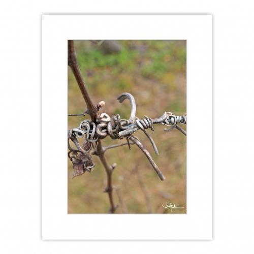 Graphisme, Vrilles séchées de vigne sur fond ocre, un bijou végétal