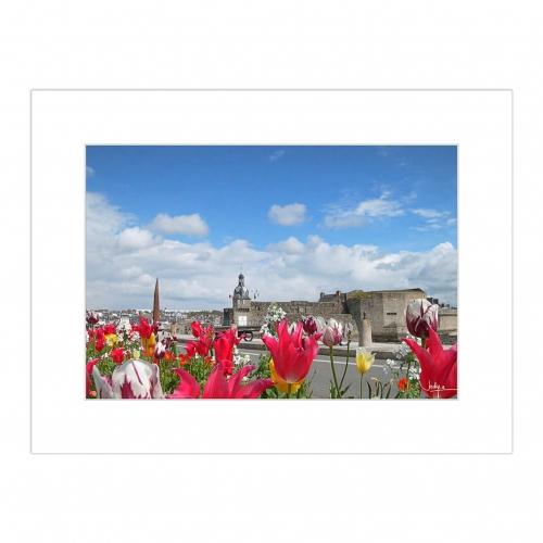 La Ville close de Concarneau prise derrière un parterre de tulipes multicolores, Quai Peneroff.